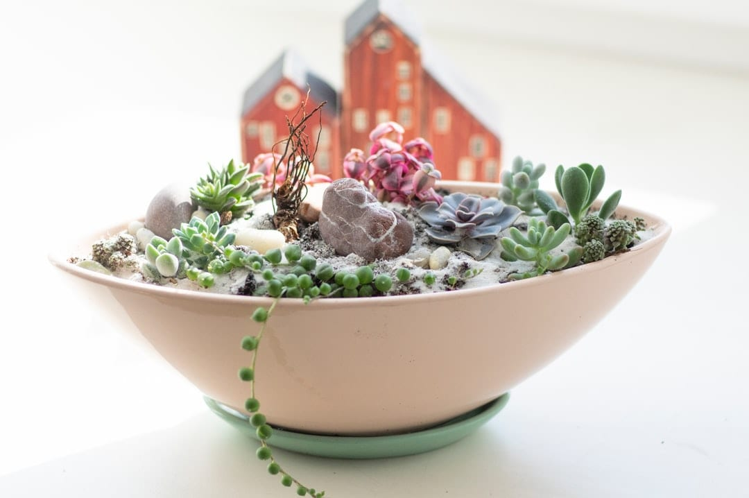 A bowl of food with a green plant